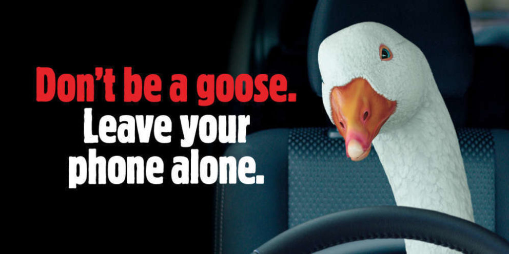 Don't be a goose. Leave your phone alone.